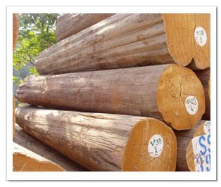 Lại kiến nghị cấm xuất khẩu gỗ tròn